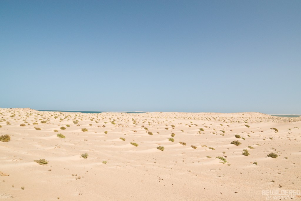 On the way to white dune
