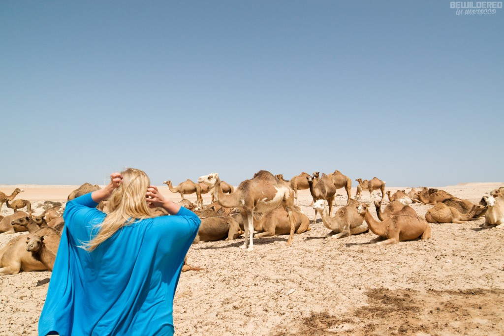 wild camels and I ;)