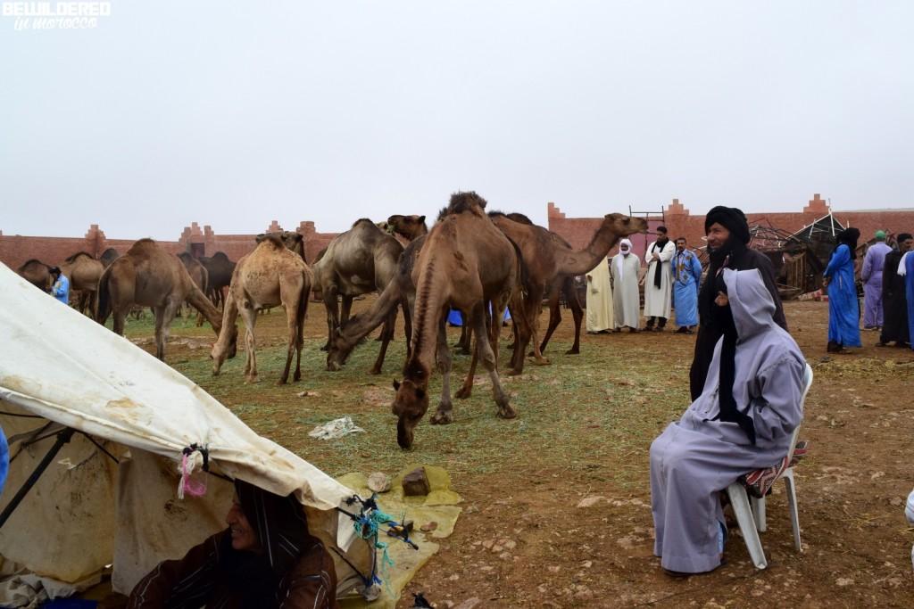 camel market on Saturday in Gulmim