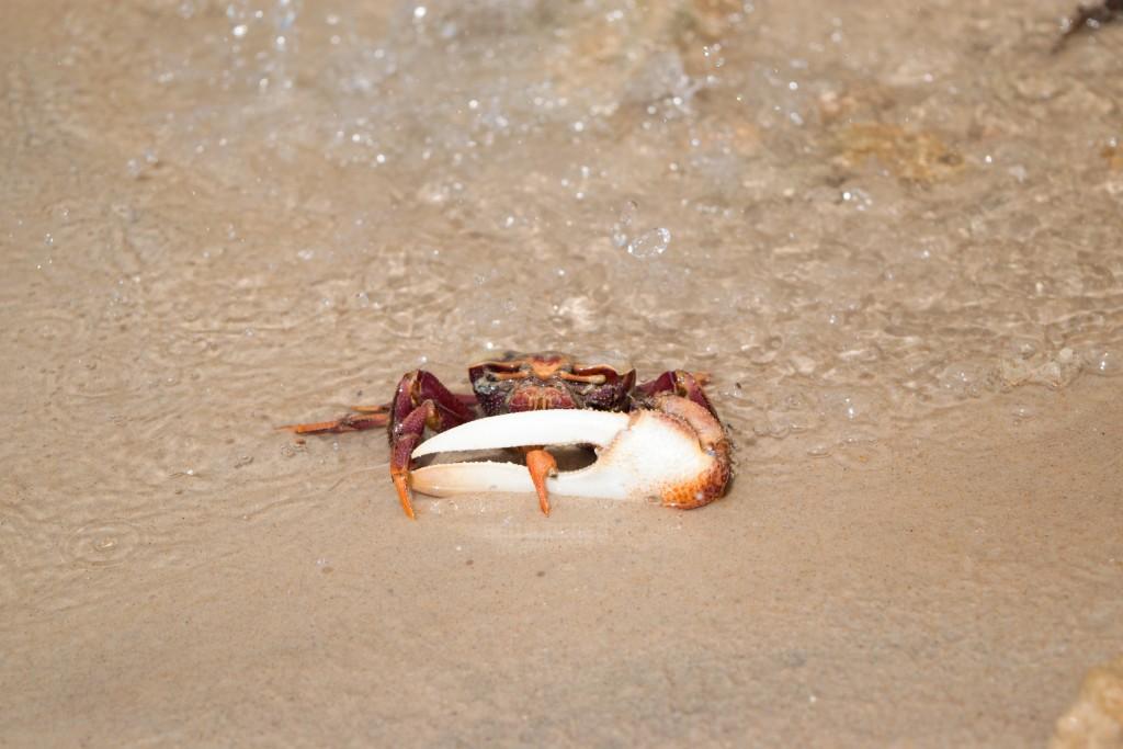 Crabs everywhere:)