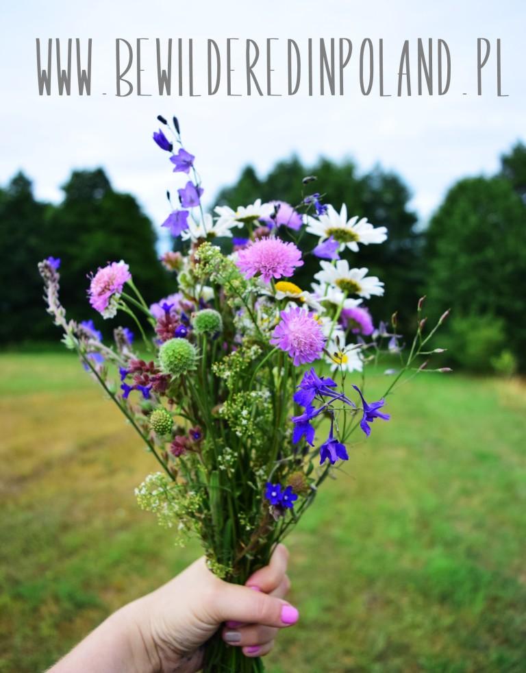 polskie łąki bukiet polne kwiaty mazurkie klimaty