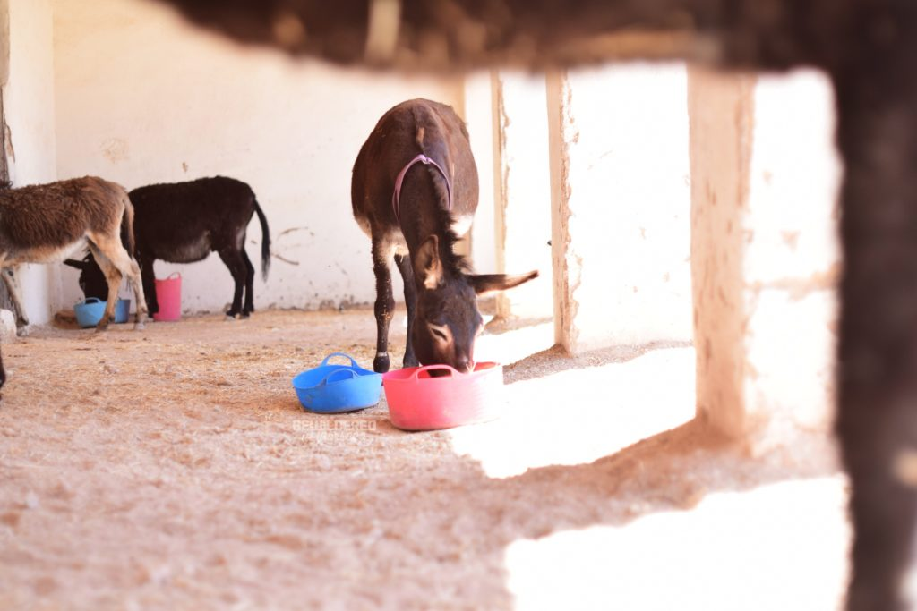 Jarjeer Mules and Donkey Sanctuary