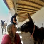 Jarjeer Retirement Home And Sanctuary For Donkeys And Mules In Douar Oumnas