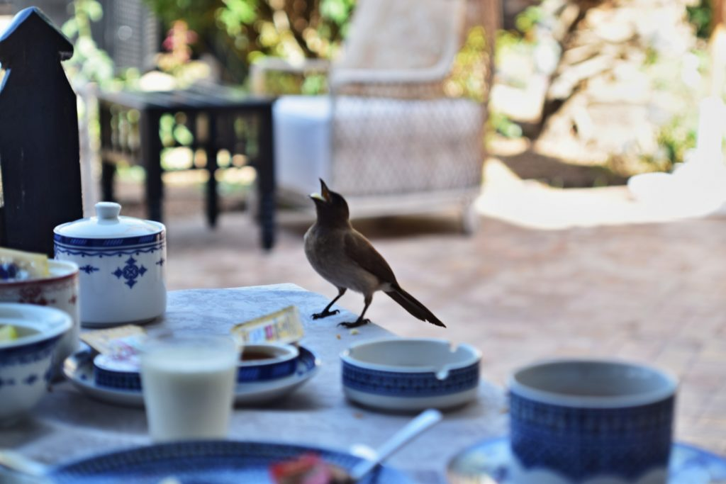 Breakfast Palais de l'o