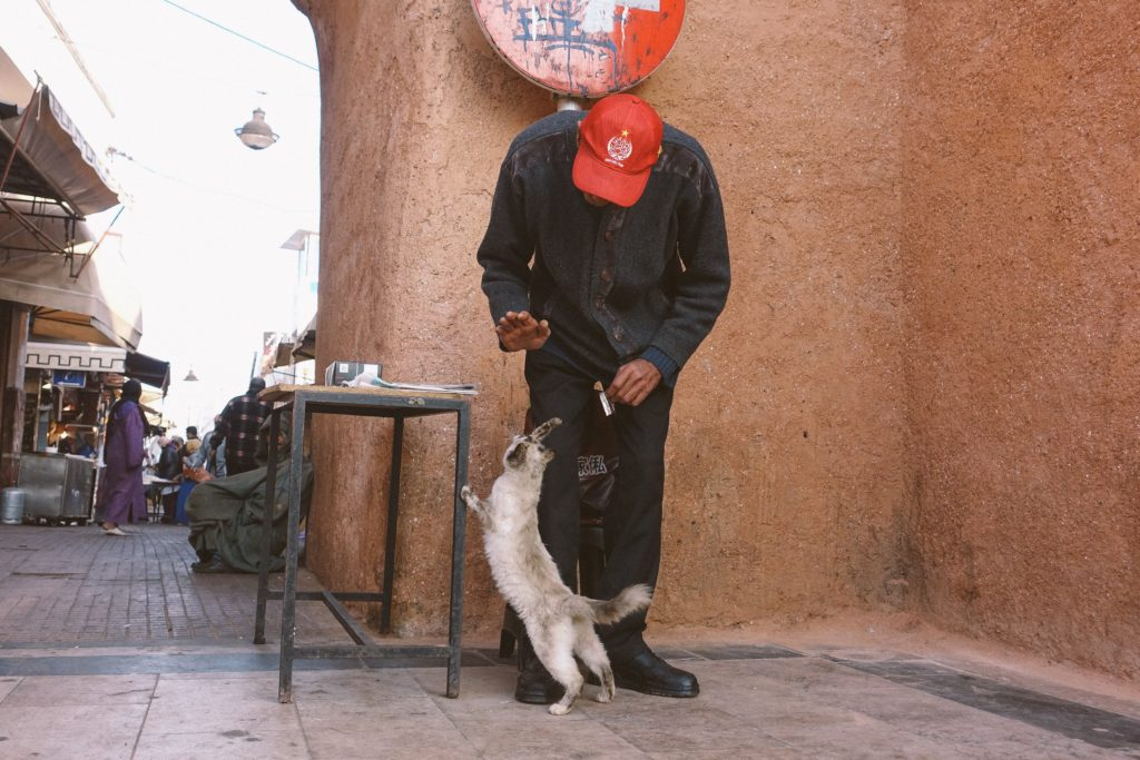 This relationship between the cat and the man was my daily life whenever I went to the medina of Rabat. Every morning, the cat was waiting for the man to bring him his portion of cheese, rabat medina hi5 high5 high funny cat kitten animals